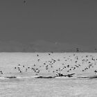 The trail of seagulls by marcopuch