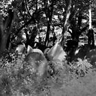 Liverpool Cathedral Gravestones by PhotogeniquE IPA