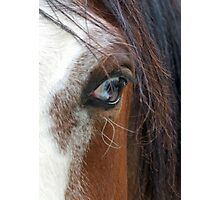 Eye of the Horse Photographic Print