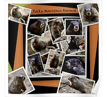 ROCKY MOUNTAIN MARMOT Poster