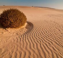 Animal tracks in the sand by Nick Pitsas
