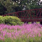 Purple Loosestrife by jules572