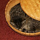 Cat In A Basket by AlGrover