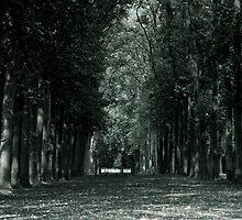 Versailles by Diane Robertson