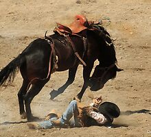 The Bronc Won, Montana Rodeo Photo by Donna Ridgway