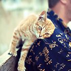 cat purrs and rubs shoulders by Iuliia Dumnova