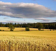Northumberland cornfield by IngridSonja