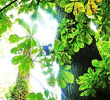 Leaves, Light and Tree- Welsh Forest by Hannah Smith