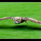 Flying Low by Kevin Finlay