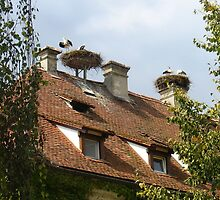 Living with Storks by Ellanita