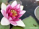 Tree Frog Relaxing Next to Blooming Waterlily Flower by Barberelli