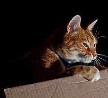 Cat In a Box by Keith Irving