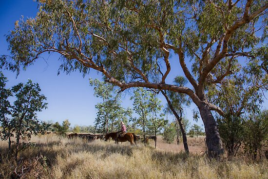 Bloodwoods, horseman and cattle - Camooweal by Carmel Williams