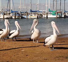Pelican's Glance by WendyJC