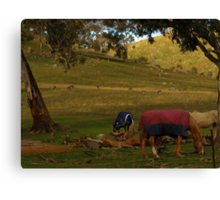 A Late Afternoon Rural Scape Canvas Print