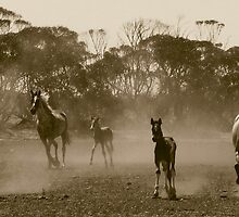 Herd of dust.. by Penny Kittel