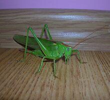 Skakavac (Orthoptera) by Iveta Đurovka