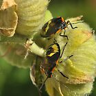 Beetle  LOVE by Corinne Noon