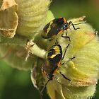 Beetle  LOVE by Corinne Noon