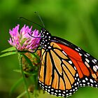 Beautiful Butterflies! by Brent McMurry
