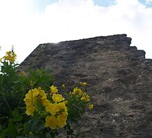 Mission San Jose Wall and Flowers by littlefishtale