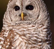 Dark Lenses / Barred Owl by Gary Fairhead