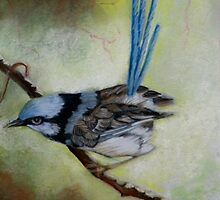 "Blue Wren  ""Perfect View""  SOLD by Sandra  Sengstock-Miller"
