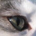 Cat's Eye by Kim  Lambert
