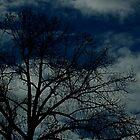 trees in shadow by scarlettheartt