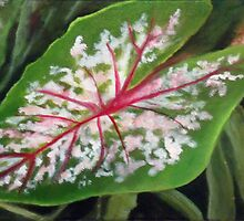 Caladium by Rosie Brown