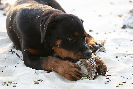 Vanuatu - The sun, the sand, the coconuts...and 4 big paws by Danielleh