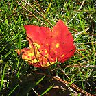 red and green by Leeanne Middleton