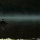 Misty Gull by JimSanders
