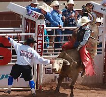 Bull Fighters, Rodeo, Bulls, Calgary Stampede by bjuke
