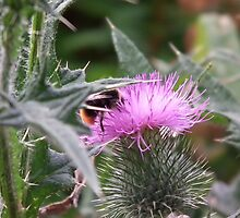 thistle  by sceneclickseen