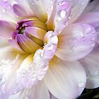 2014  Flowers In Macro Calendar  by naturelover