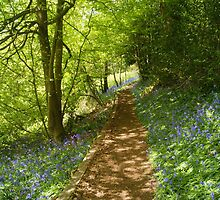 bluebell  pathway by dawn cox