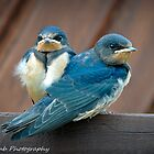 snuggling blue bridies by Vincent Lamb