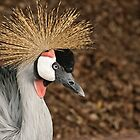East African Crowned Crane by Tracey  Dryka
