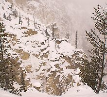 Yellowstone Canyon Snowstorm by Forrest J. Wolfe