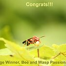 Winner by vasu