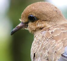 Lonesome Dove by Thomas Stevens