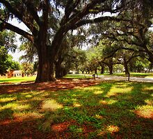 Boone Hall Plantation - Entrance by photosan