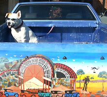 Desert Dog..... Broken Hill by Juilee  Pryor