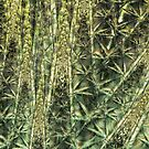 Bamboo depths by Fiery-Fire
