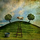 Cow on a hill by Þórdis B.