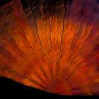 Copper Silk Fan by coppertrees