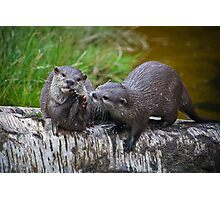 Otter Delight Photographic Print