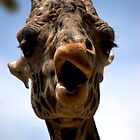 The Giraffe is smirking by Meeli Sonn