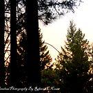 Dark and  Lighht  Sky. by becca2425